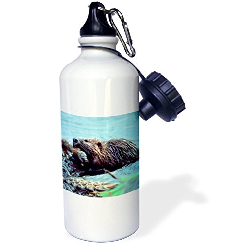 3dRose wb_1021_1 Beaver Sports Water Bottle, 21 oz, White
