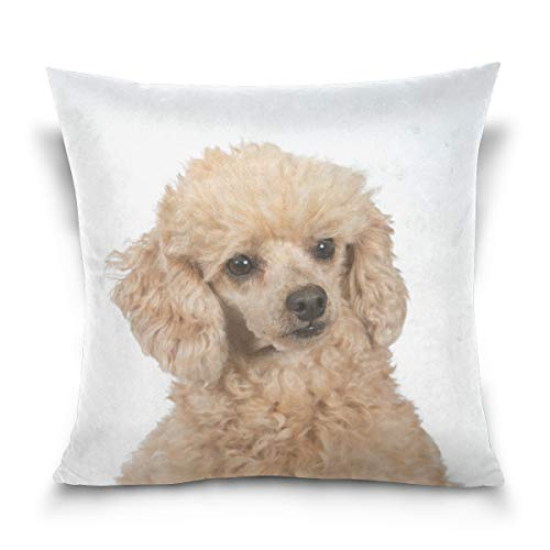 Hokkien Blue Viper Apricot Poodle Portrait Decorative Square Throw Pillow Case Cushion Cover for Sofa Bedroom Car Double-Sided Design 18 x 18 inch