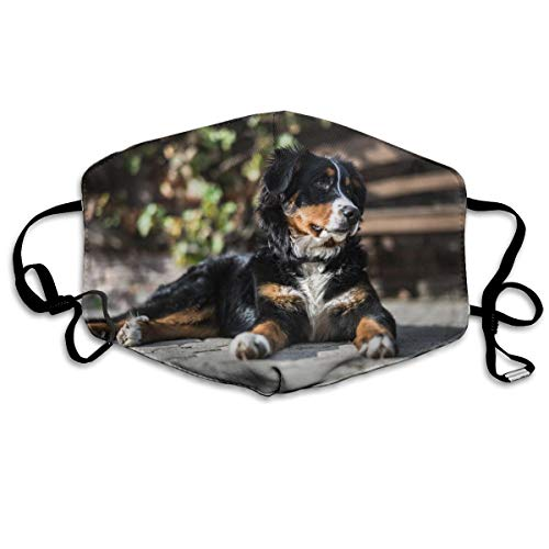 Face Mask Adult Bernese Mountain Dog Breathable Reusable Ear Loop Unisex Face Balaclava Bandana for Women Men…