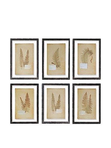 Framed Vintage Fern Prints, Set of 8 ()