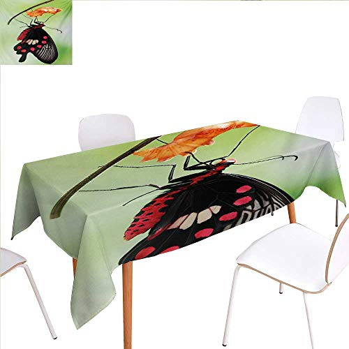 (familytaste Swallowtail Butterfly Rectangular Tablecloth Amazing Moment Coming Out of Cocoon Chrysalis Transformation Oblong Wrinkle Resistant Tablecloth 54