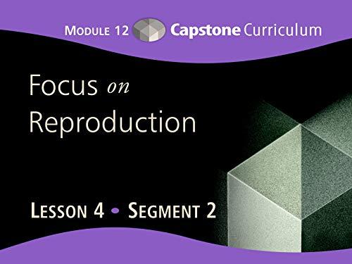 Lesson 4-Segment 2 ()