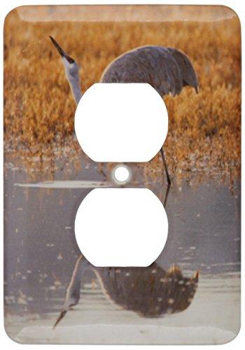 3dRose Lsp_145238_6 - Cubierta de salida para grúa de arena de pájaros, diseño de pájaros de México Usa Us32 Ldi0041...