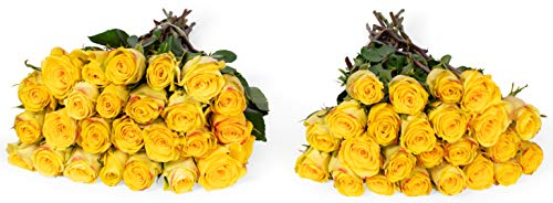 Benchmark Bouquets 50 Yellow Roses Farm Direct (Fresh Cut Flowers) ()
