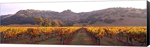 Stag's Leap Wine Cellars, Napa Valley, CA by Panoramic Images Canvas Art Wall Picture, Museum Wrapped with Black Sides, 53 x 17 inches ()