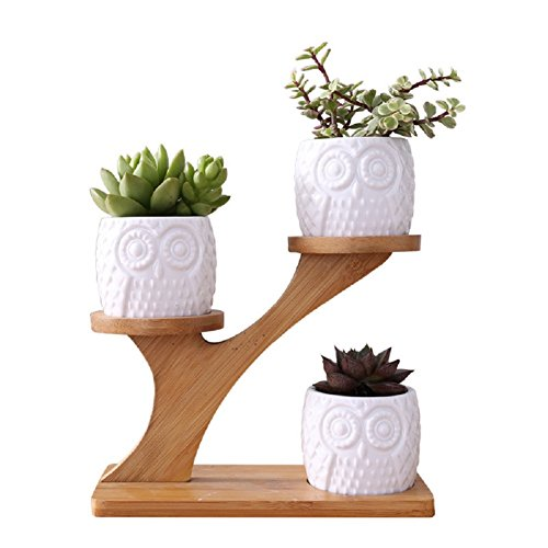 Youfui Cute Owl Pot Succulent Planter Flowerpot Decor for Home Office Desk,with Bamboo Saucers Stand Holder (Owl Pot with Stand)
