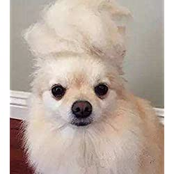 Trump Style Dog Wig Pet Costume, Donald Cat Head Wear Apparel Toy for Halloween, Christmas, parties, festivals by FMJI