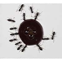 30ml Protein syrup for queens ants and ants colony