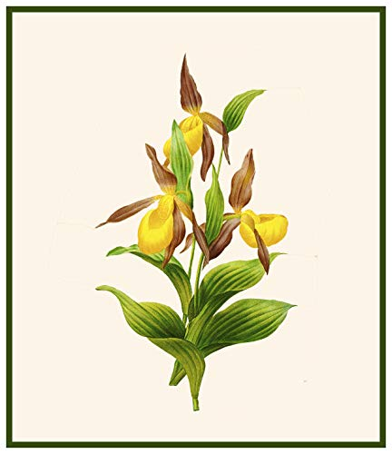 Orenco Originals Redoute's Lady Slipper Orchid Flowers Counted Cross Stitch Pattern ()