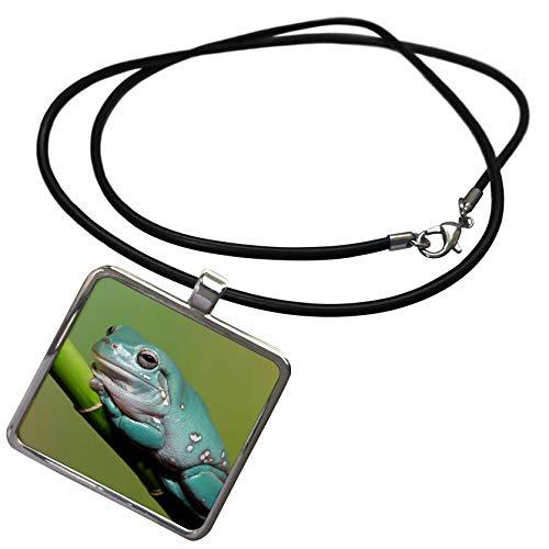 3dRose Danita Delimont - Frogs - Dumpy Tree Frog, Australian Green Tree Frog, Litoria caerulea. - Necklace with Rectangle Pendant (ncl_312941_1) ()