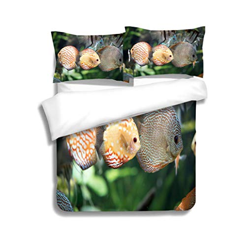 - MTSJTliangwan Family Bed Pigeon Blood Discus Fish Symphysodon aequifasciatus 3 Piece Bedding Set with Pillow Shams, Queen/Full, Dark Orange White Teal Coral