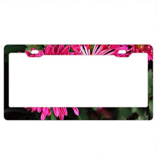 YEX Abstract Emperor of China Chrysanthemum License Plate Frame Car Tag Frame Auto License Plate Holder 12