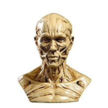 "4"" Human Model Anatomy Skull Head Muscle Bone Medical Drawing Antique Yellow"