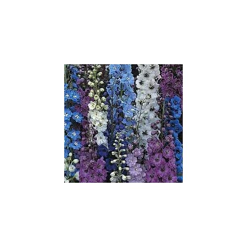 Top Delphinium Seed, 150+ Seeds, Giant Imperial Mix, Organic, Striking Mixed Colors supplier