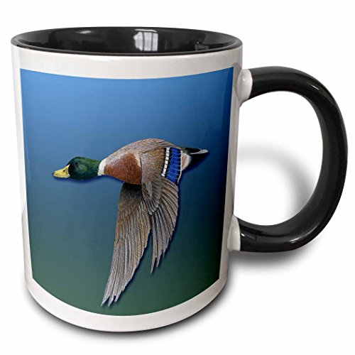 (3dRose BLN Vintage Wildlife, Pets and Insects Collection - Male Mallard Duck in Flight on a Blue to Green Gradient Background - 15oz Two-Tone Black Mug (mug_170882_9))