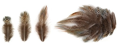 Ring-necked Pheasant Lower Back Feathers (20 Pieces), for sale  Delivered anywhere in USA