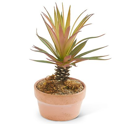 mini palm tree - 4