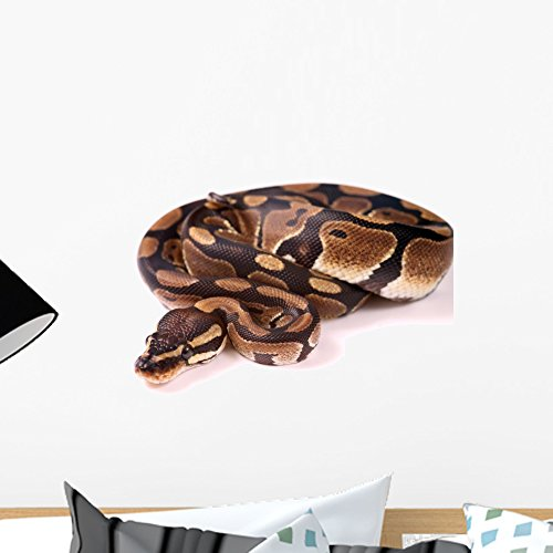 Wallmonkeys Royal Python Wall Decal Peel and Stick Graphic WM305068 (18 in W x 12 in - Decals Wall Snake