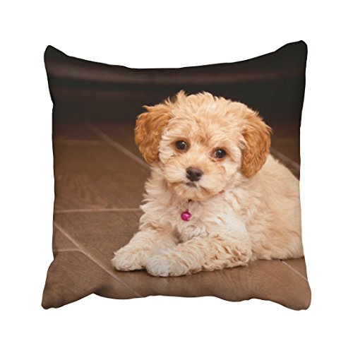 Musesh Baby Maltese Poodle Mix or Maltipoo Puppy Dog Cushions Case Throw Pillow Cover for Sofa Home Decorative Pillowslip Gift Ideas Household Pillowcase Zippered Pillow Covers 18x18Inch