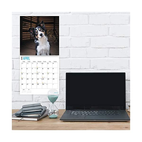 2020 Border Collies Wall Calendar by Bright Day, 16 Month 12 x 12 Inch, Cute Dogs Puppy Animals Colley 3
