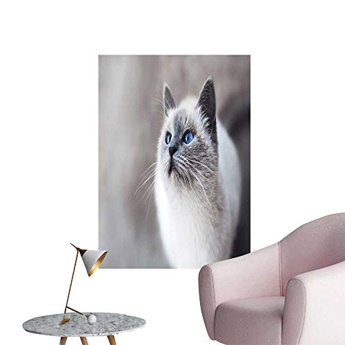 (SeptSonne Modern Painting A Lovely Cat puss n'toots Lovely Cats Home Decoration,28