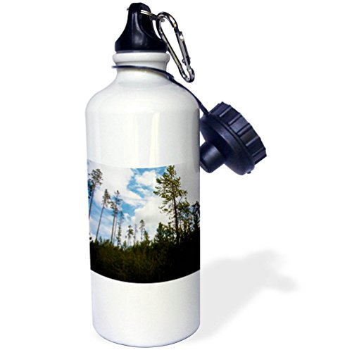 3dRose Jos Fauxtographee- Yellowstone Trees - Trees in Yellowstone shot upward toward the sky - 21 oz Sports Water Bottle (wb_273461_1) (Holiday Park Upward)