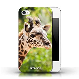 KOBALT? Protective Hard Back Phone Case / Cover for Apple iPhone 4/4S   Giraffe Design   Wildlife Animals Collection