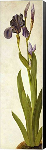an Iris by Albrecht Durer Canvas Art Wall Picture, Museum Wrapped with Black Sides, 8 x 26 inches