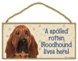 (SJT61911) A spoiled rotten Bloodhound lives here wood sign plaque 5