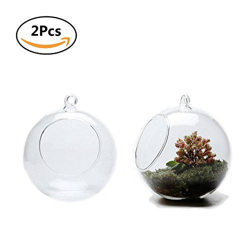 T4U 5.75 Inch Glass Hanging Plant Terrariums Air Plant Pot Container Home Office Wedding Decoration Votive Holder Sucuulent Plant Pots - Pack of 2 (Decoration Container)