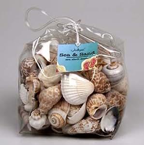 Assorted Medium Seashells (28 oz. Bag)