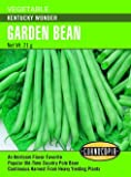 Kentucky Wonder Pole Bean Seeds 65 Seeds