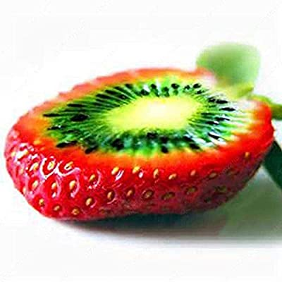 JingYu 500Pcs Rare Kiwi Strawberry Seeds, Strawberry Appearance with Kiwi Fruit Pulp, Fruit Seeds Suitable for Planting Yard Bonsai Garden Balcony Kiwi Strawberry Seeds : Garden & Outdoor