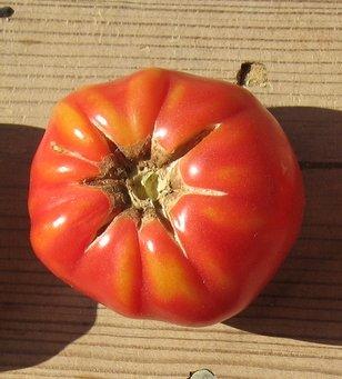 75+ German Johnson Tomato Seeds- Heirloom Variety