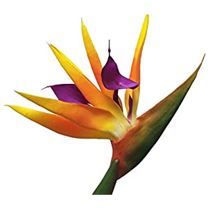 "AMERIQUE Gorgeous Pack Of Four (4) 31.5"" Real Touch Bird Of Paradise Artificial Silk Flower Sprays, Feel Real Tech, Large Permanent Flower, Super Quality, 4 Pieces 3"