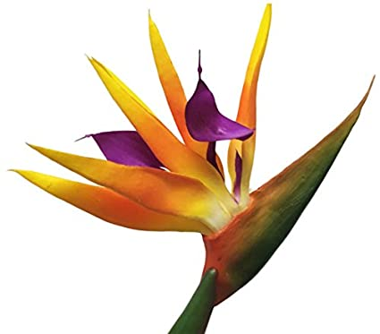 Amazon amerique gorgeous pack of four 4 315 real touch bird amerique gorgeous pack of four 4 315quot real touch bird of paradise artificial mightylinksfo