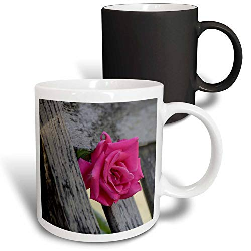 3dRose Stamp City - flowers - Photograph of a pink rose growing through the slat of a rocking chair. - 11oz Magic Transforming Mug - Magic Rocking Chair Garden