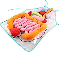 Feature: 1.The body organ toys make it a fun way to help kids know what's inside human body. Kids can learn the names, shapes and locations of body organs. 2. The model by heart, large intestine, small intestine, lung, stomach, kidney,...
