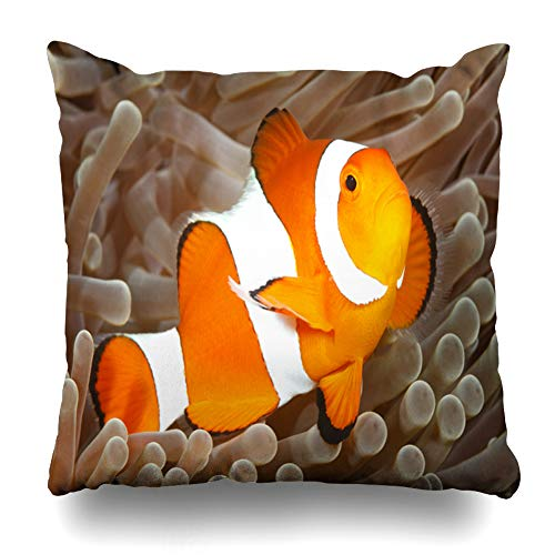 (Ahawoso Throw Pillow Cover Sealife Orange Fish Clown Anemonefish Amphiprion Percula Swimming Among Red Anemone Bali Closeup Home Decor Pillow Case Square Size 20x20 Inches Zippered Pillowcase)