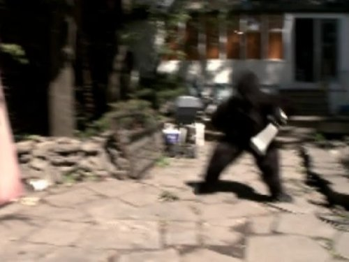 Who C (Rent A Gorilla Suit)