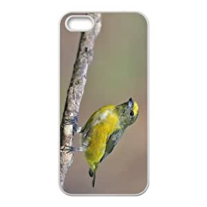 Siskin Hight Quality Plastic Case for Iphone 5s