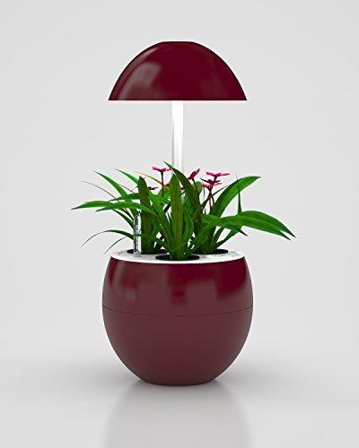 Grow Light Herb Garden - 7