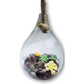 Fat Plants San Diego Hanging Glass Teardrop Succulent Terrarium with Rope Complete Kit, Purple