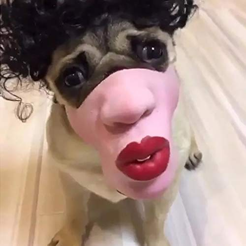 Scary Dog Costumes - Karooch Dog Funny Big Red Lip