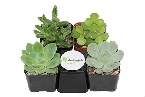 How to Grow an Easy Succulent Garden | 31Daily.com