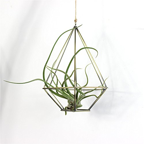 Gold Metal Plant Stand - 9