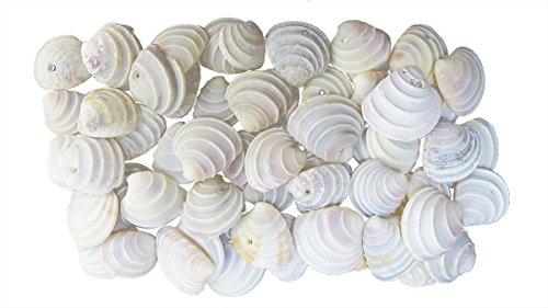 Philippine Shell Jewelry (Quality Selected Seashells - Approx 200 pcs shells – Tiara Venus / Placamen Tiara for Seashell Vases, Seashell Boxes, Seashell Frames, Seashell Jewelry Making)