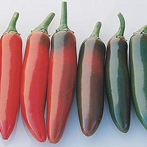 Serrano del Sol F1 Hybrid Hot Pepper Seeds - whole or chop for sauces and salsa(100 - Seeds) ()