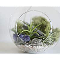 Prismatic Gardens Air Plants Hanging Terrarium Kit – Superb Mini Botanical Decorative Glass Planter with Small Live Tillandsia Air Plant, Small Pyrite Stone, Amethyst Quartz Crystals, Moss, Home Décor