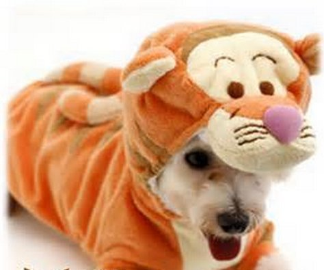 Disney - Winnie the Pooh - Tigger - Dress Up Dog Costume (Disney Costumes For Dogs)